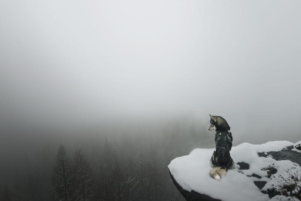 April, April … Winterüberraschung im Bielatal
