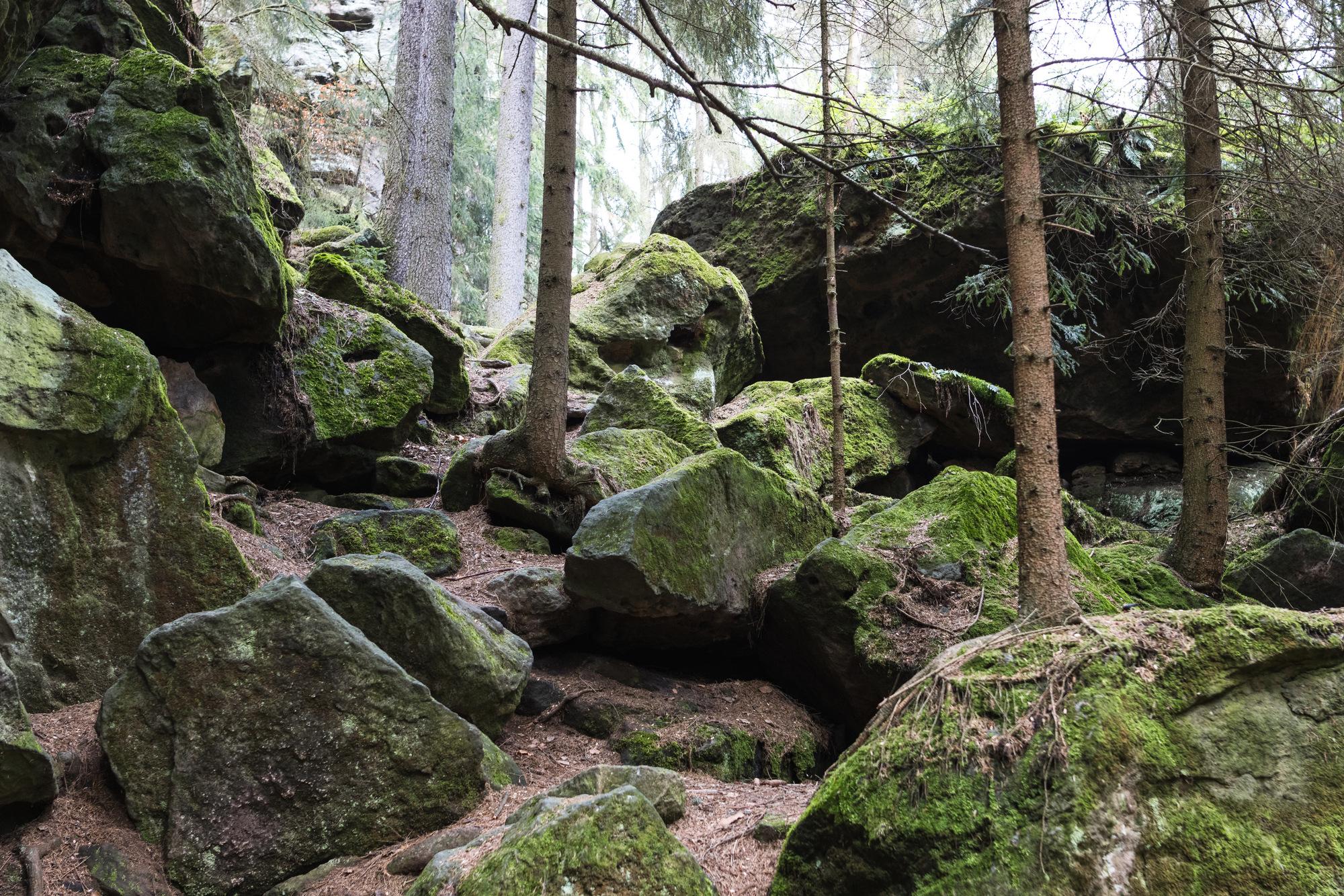 Verwunschene Wege rund um den Quirl